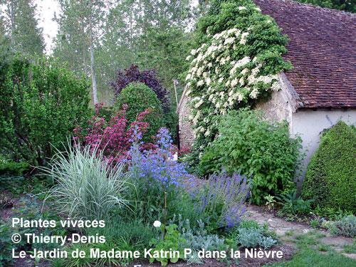 une plantes annuelles et plantes vivaces ici l 39 atelier des fleurs. Black Bedroom Furniture Sets. Home Design Ideas