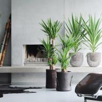 decorum plante verte l 39 atelier des fleurs. Black Bedroom Furniture Sets. Home Design Ideas