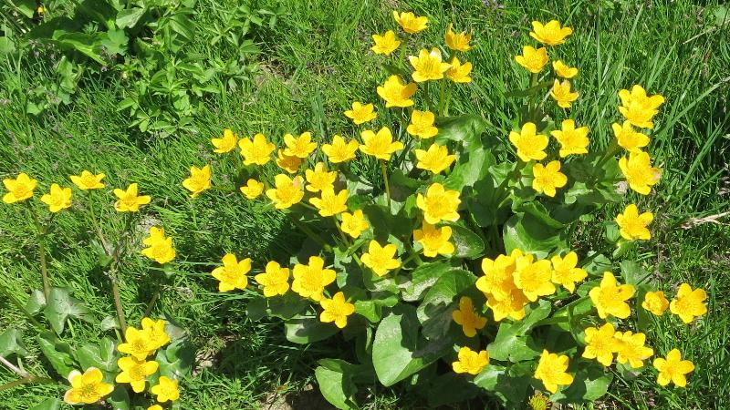 Fleur commencant par n - l'atelier des fleurs
