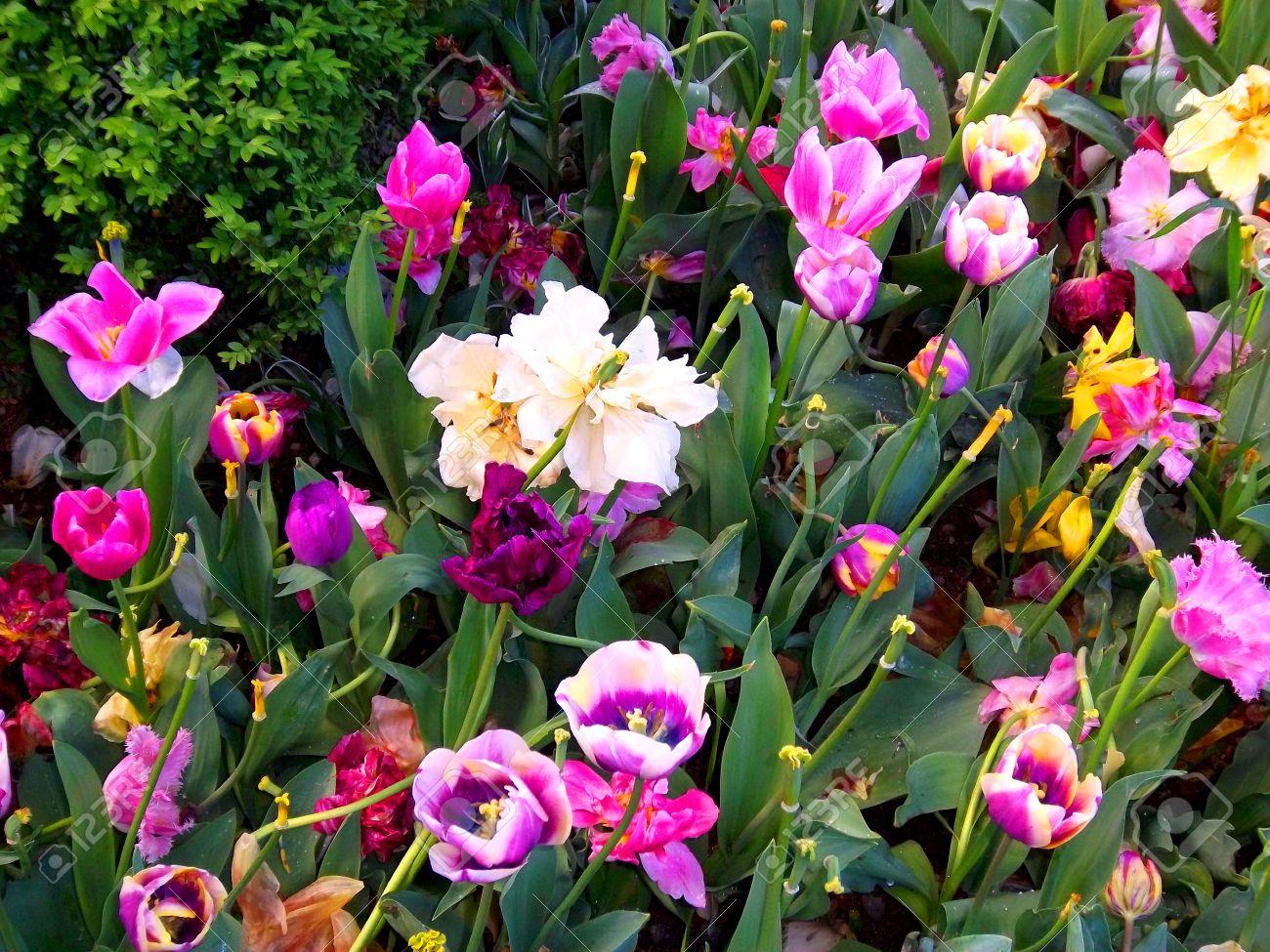 les belles fleurs du monde l 39 atelier des fleurs. Black Bedroom Furniture Sets. Home Design Ideas