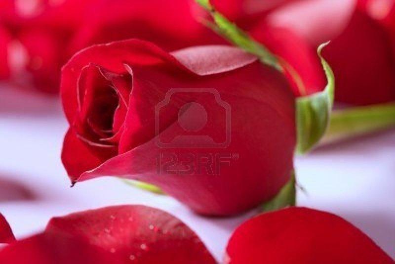 les belles fleurs d amour l 39 atelier des fleurs. Black Bedroom Furniture Sets. Home Design Ideas