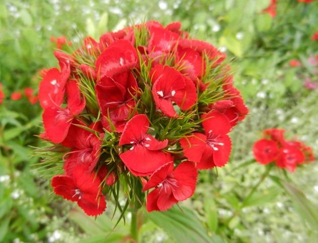 Fleur commencant par d - l'atelier des fleurs