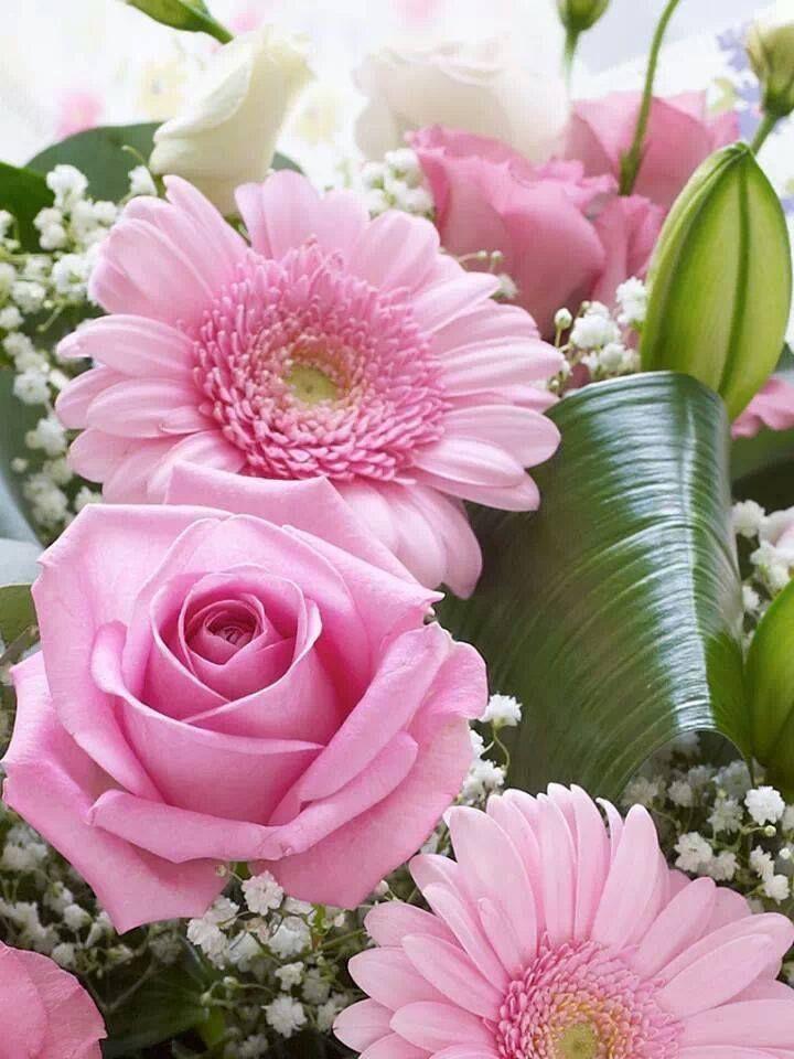 photos des plus belles fleurs du monde l 39 atelier des fleurs. Black Bedroom Furniture Sets. Home Design Ideas