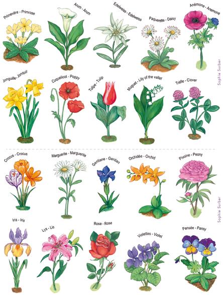 dictionnaire des fleurs avec photos l 39 atelier des fleurs. Black Bedroom Furniture Sets. Home Design Ideas