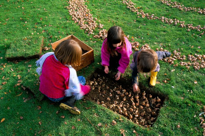 Planter des bulbes de tulipes en avril l 39 atelier des fleurs - Quand planter les bulbes de tulipes et jonquilles ...