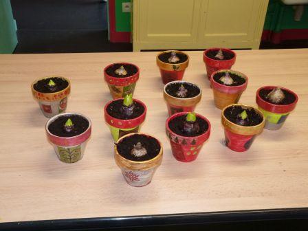 Comment planter des bulbes de jacinthes l 39 atelier des fleurs - Comment planter des jacinthes ...