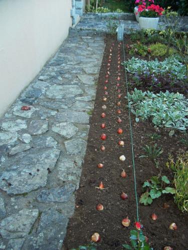 quand planter des tulipes l 39 atelier des fleurs. Black Bedroom Furniture Sets. Home Design Ideas