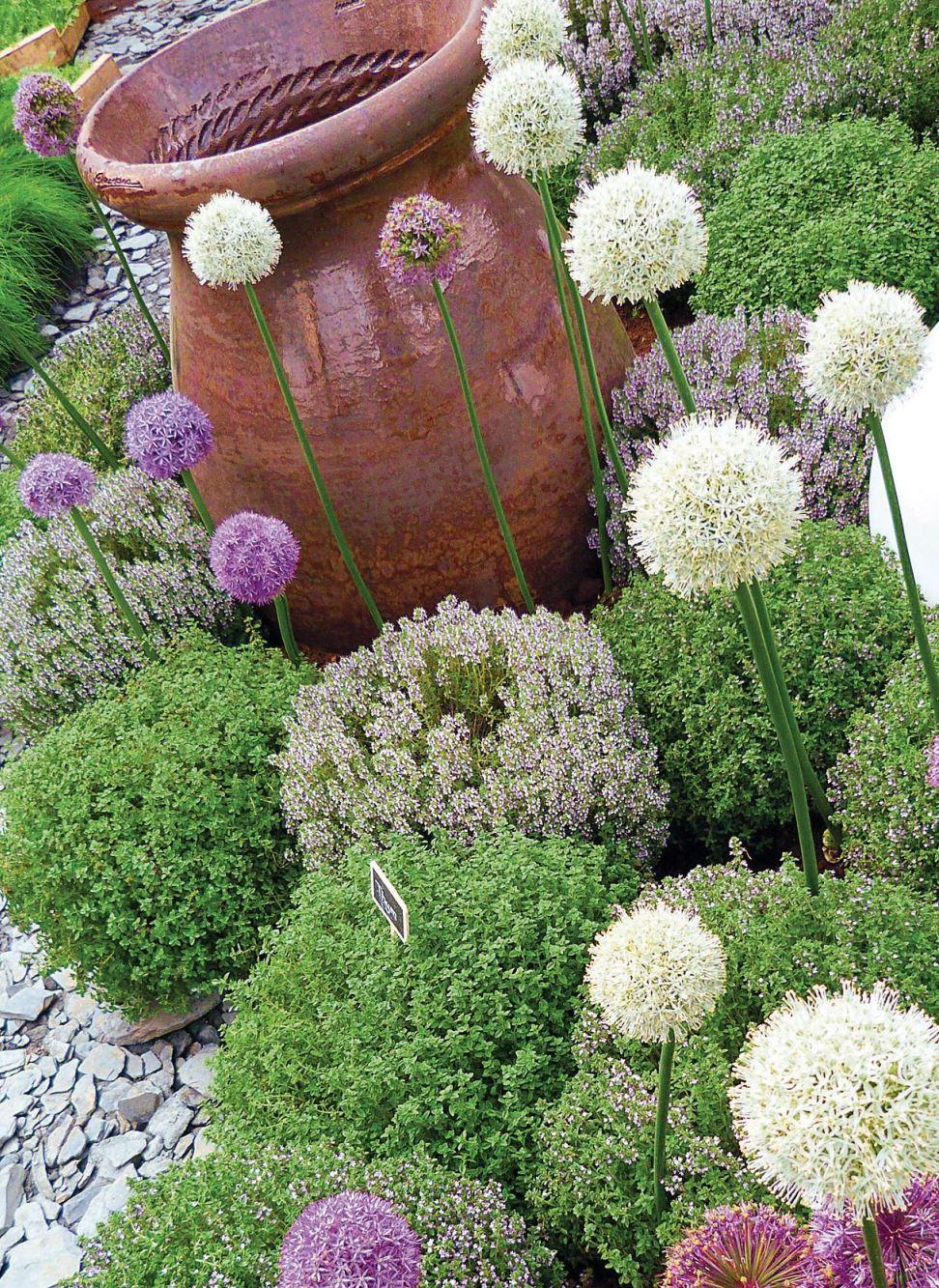 bulbes de fleurs planter en mars l 39 atelier des fleurs. Black Bedroom Furniture Sets. Home Design Ideas