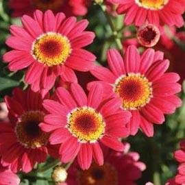 quelle fleur planter en mars avril l 39 atelier des fleurs. Black Bedroom Furniture Sets. Home Design Ideas