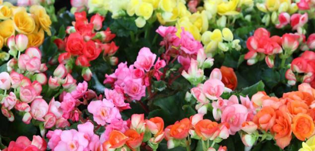 fleurs printemps t l 39 atelier des fleurs. Black Bedroom Furniture Sets. Home Design Ideas