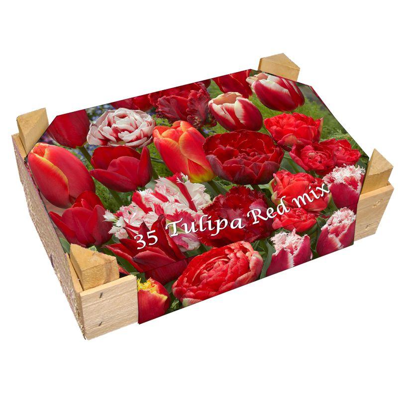 bulbes tulipes pas cher l 39 atelier des fleurs. Black Bedroom Furniture Sets. Home Design Ideas