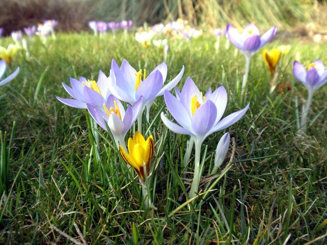 Bulbes de fleurs a planter en automne l 39 atelier des fleurs - Bulbes a planter au printemps ...