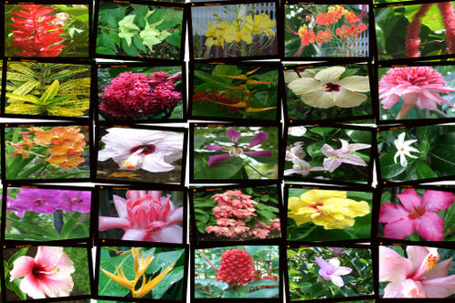 tout les nom des fleurs l 39 atelier des fleurs. Black Bedroom Furniture Sets. Home Design Ideas