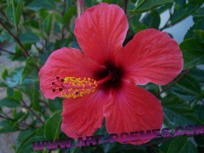 Recherche de fleurs l 39 atelier des fleurs for Offre des fleurs