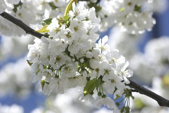 photos de fleurs de printemps l 39 atelier des fleurs. Black Bedroom Furniture Sets. Home Design Ideas