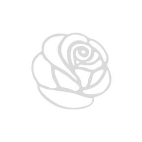 comment conserver amaryllis apres floraison