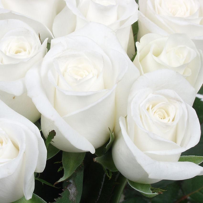 Offrir des fleurs blanches l 39 atelier des fleurs for Offrir des fleurs