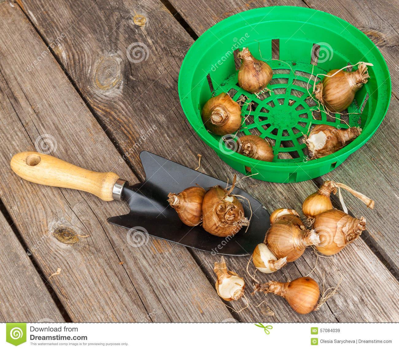 Quand planter des jonquilles l 39 atelier des fleurs - Quand planter les bulbes de tulipes et jonquilles ...