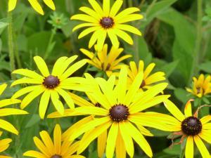 Nom de fleur commencant par a - l'atelier des fleurs