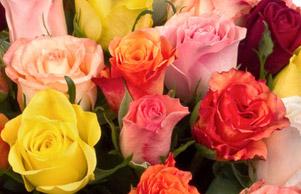 langage des roses l 39 atelier des fleurs. Black Bedroom Furniture Sets. Home Design Ideas