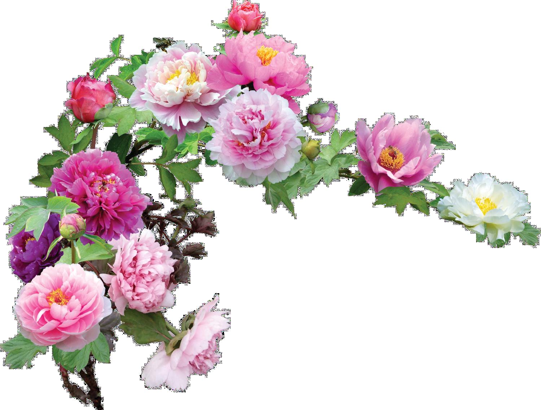 Fleurs et roses l 39 atelier des fleurs for Fleurs et fleurs