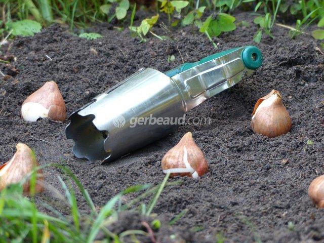 Quand planter tulipes l 39 atelier des fleurs - Quand planter de la pelouse ...