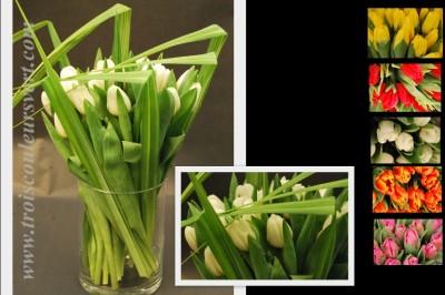 livraison tulipes a domicile l 39 atelier des fleurs. Black Bedroom Furniture Sets. Home Design Ideas