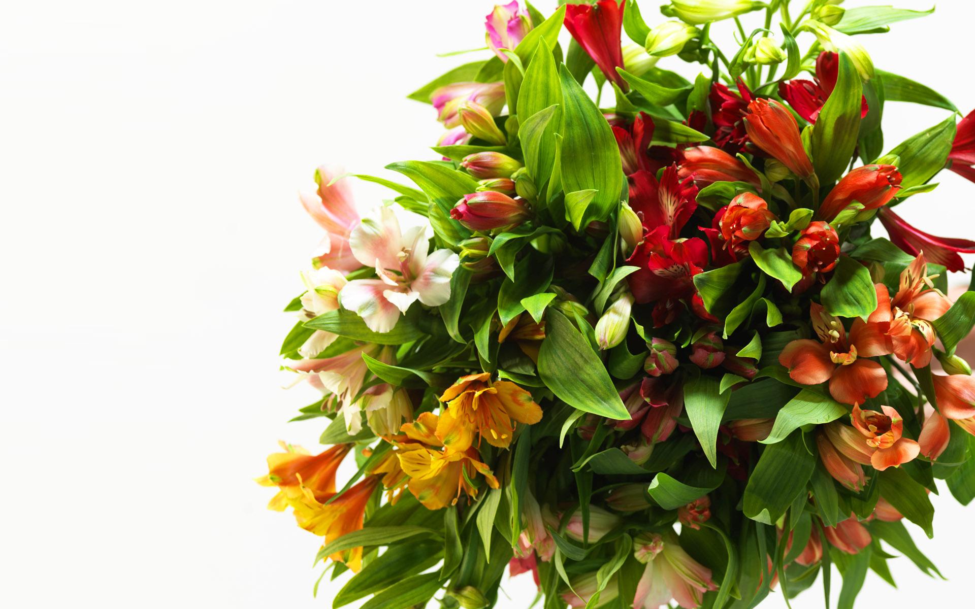 livraison fleur le dimanche l 39 atelier des fleurs. Black Bedroom Furniture Sets. Home Design Ideas