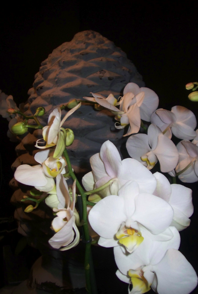 Entretien orchid e blanche en pot l 39 atelier des fleurs - Arrosage orchidee en pot ...