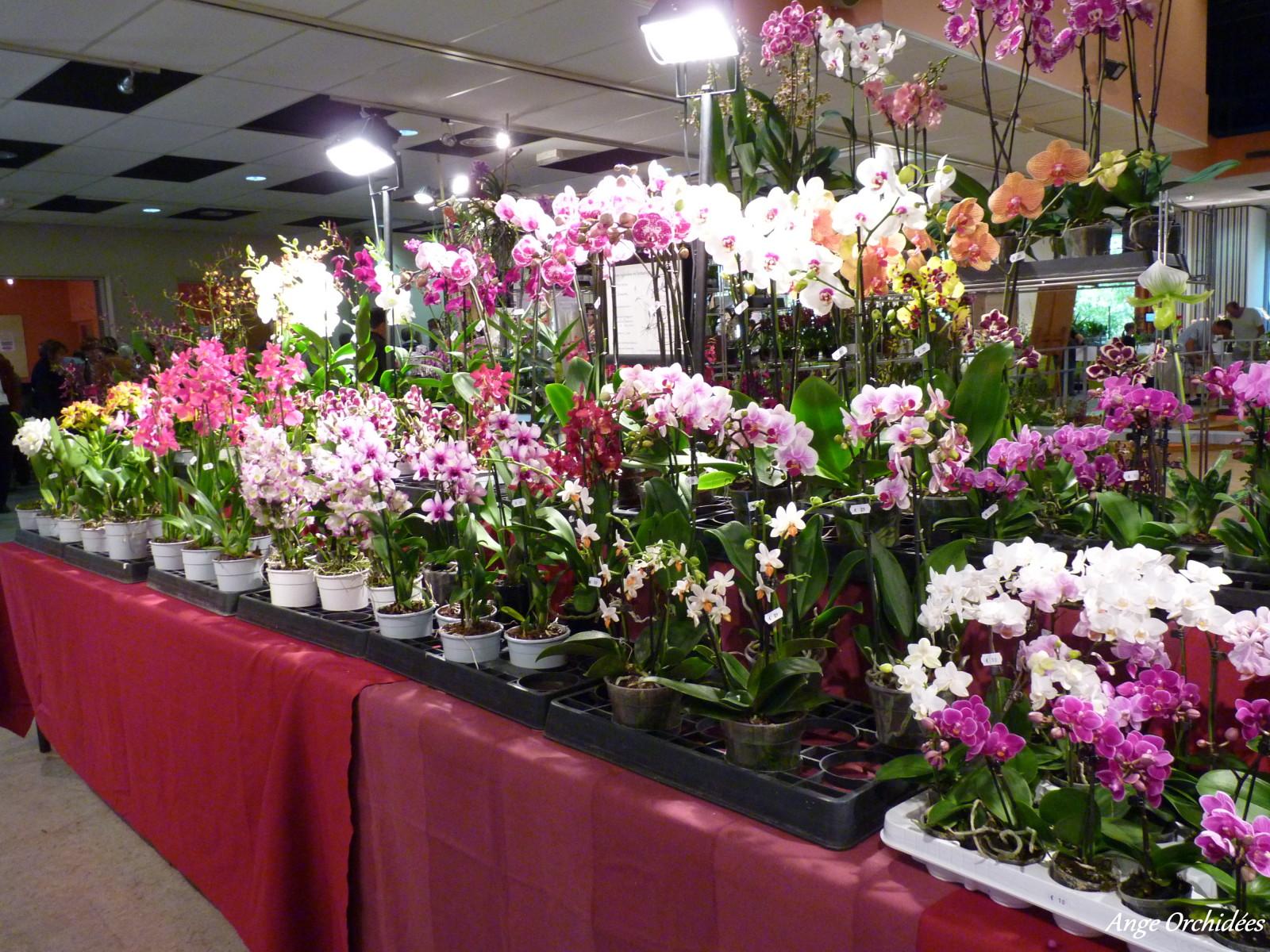 orchid es noires l 39 atelier des fleurs. Black Bedroom Furniture Sets. Home Design Ideas