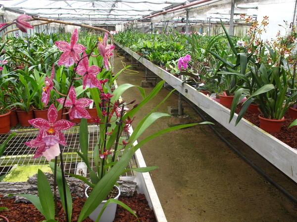 photos diff rentes sortes d orchid es l 39 atelier des fleurs. Black Bedroom Furniture Sets. Home Design Ideas