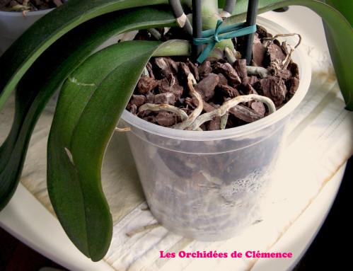 orchid e fleur fan e l 39 atelier des fleurs. Black Bedroom Furniture Sets. Home Design Ideas