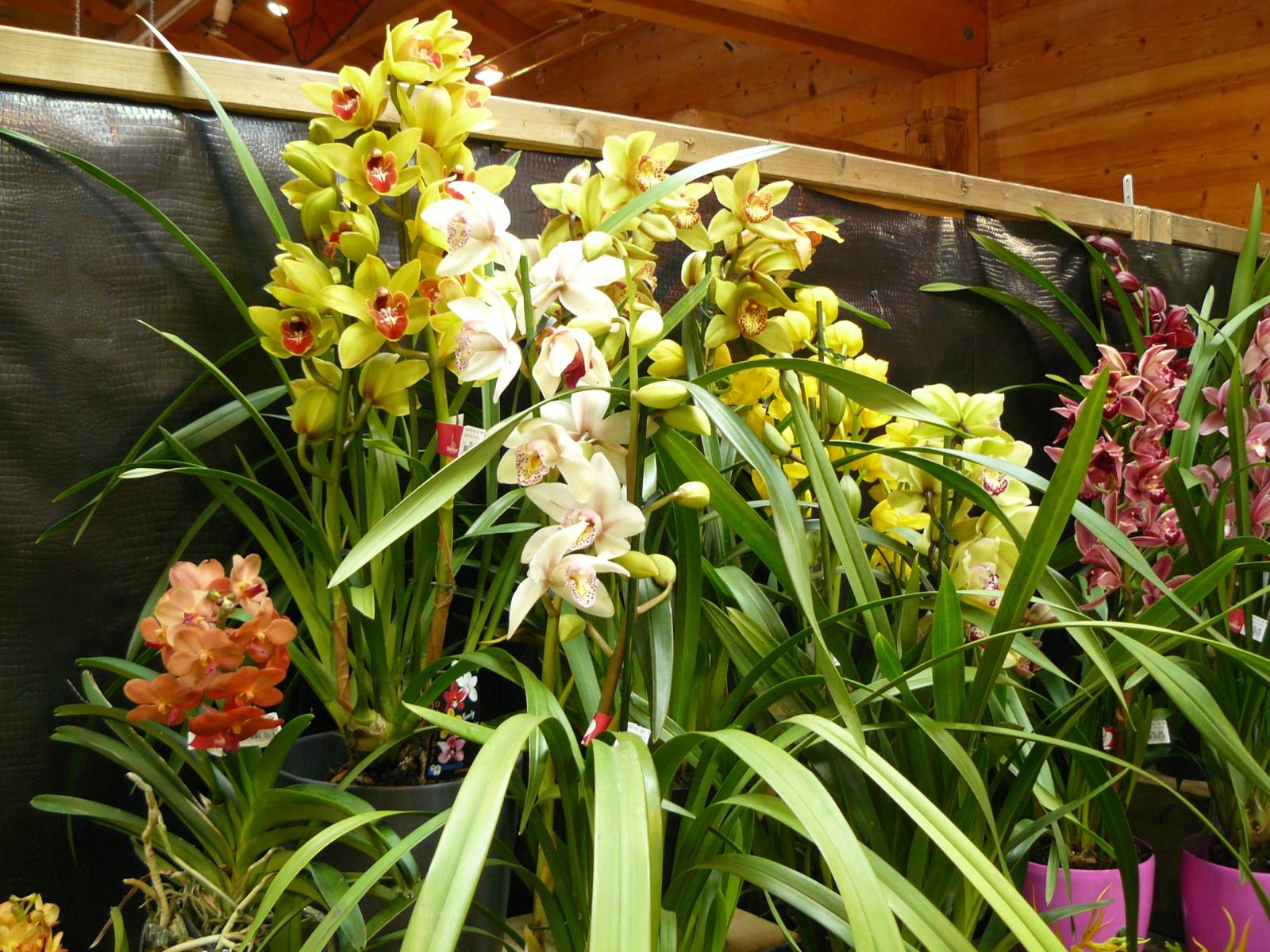 differente variete d orchidee l 39 atelier des fleurs. Black Bedroom Furniture Sets. Home Design Ideas