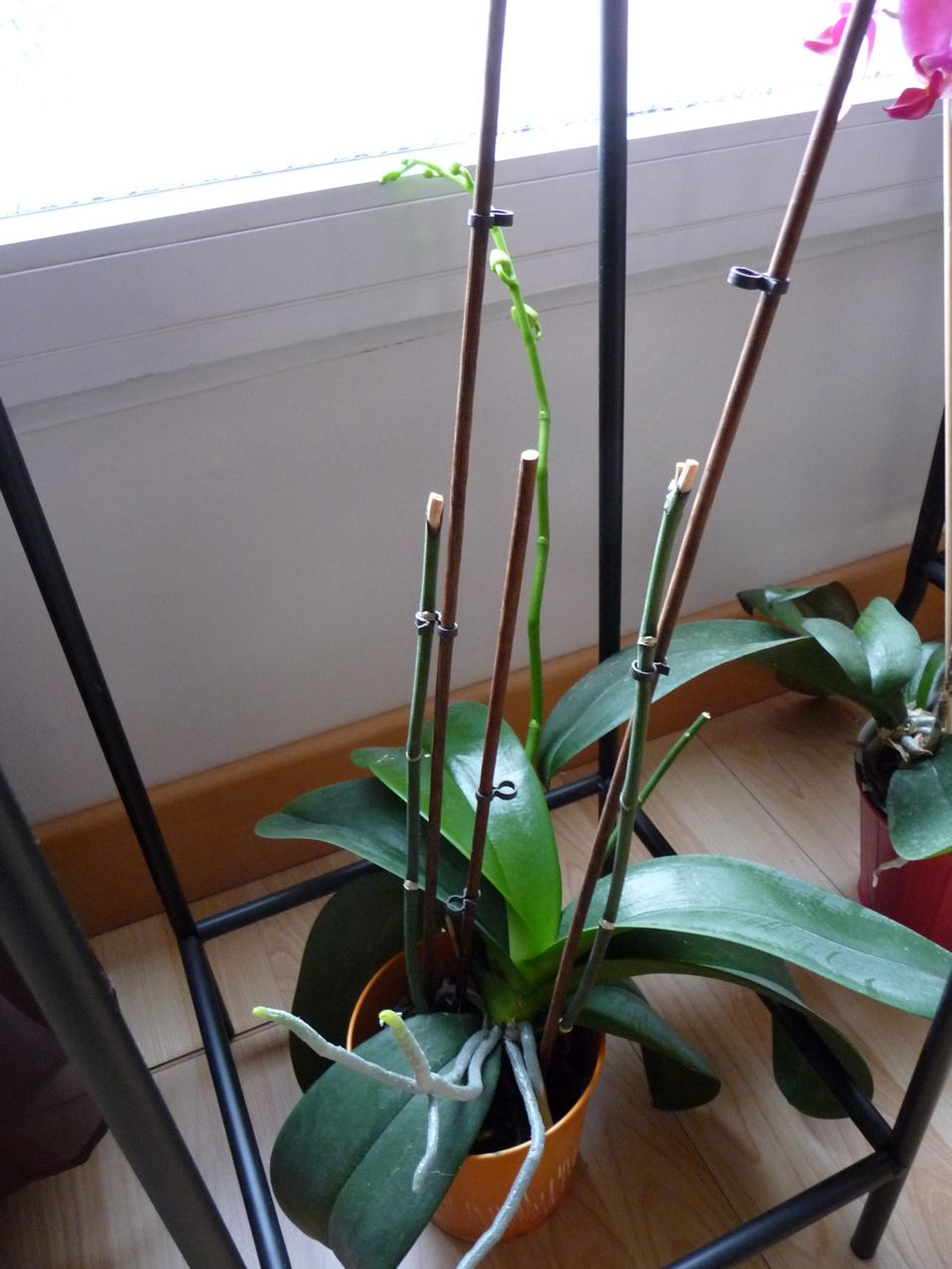orchid e repousse l 39 atelier des fleurs. Black Bedroom Furniture Sets. Home Design Ideas