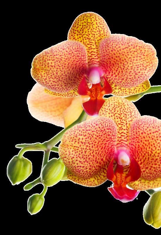 orchid e orange l 39 atelier des fleurs. Black Bedroom Furniture Sets. Home Design Ideas