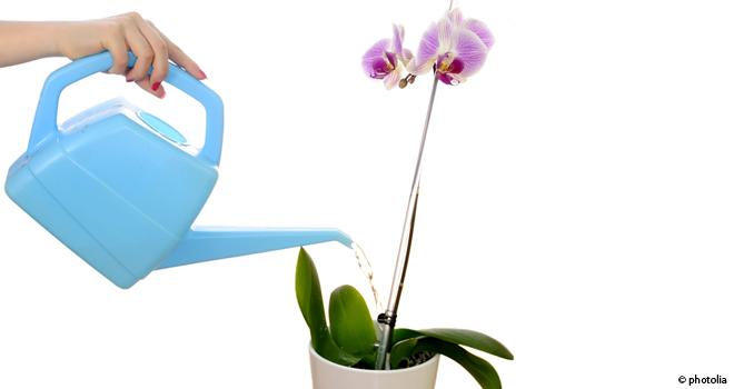 orchid e little lady l 39 atelier des fleurs. Black Bedroom Furniture Sets. Home Design Ideas