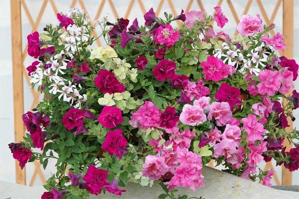 balcon fleuri plein soleil l 39 atelier des fleurs
