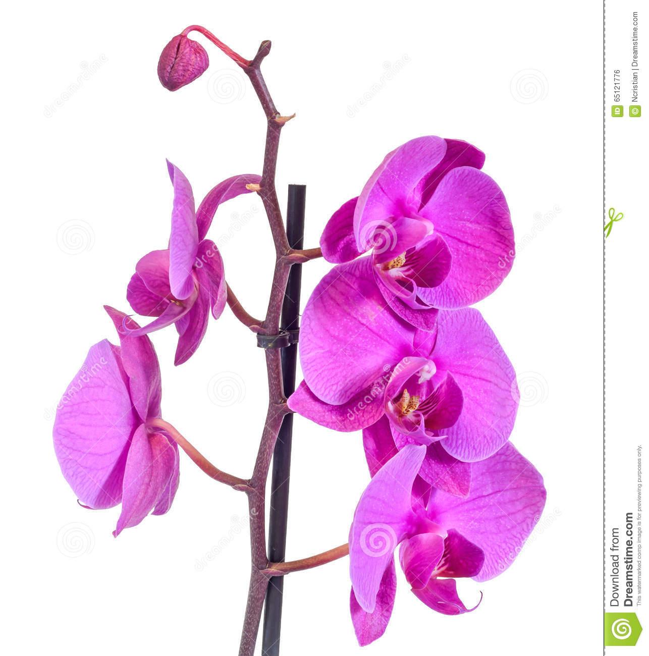 diff rents noms d orchid es l 39 atelier des fleurs. Black Bedroom Furniture Sets. Home Design Ideas
