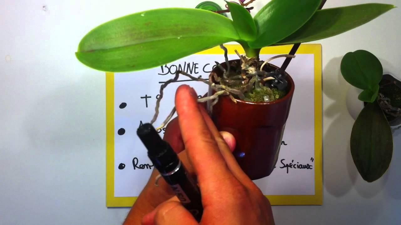 comment garder une orchid e fleurie l 39 atelier des fleurs. Black Bedroom Furniture Sets. Home Design Ideas