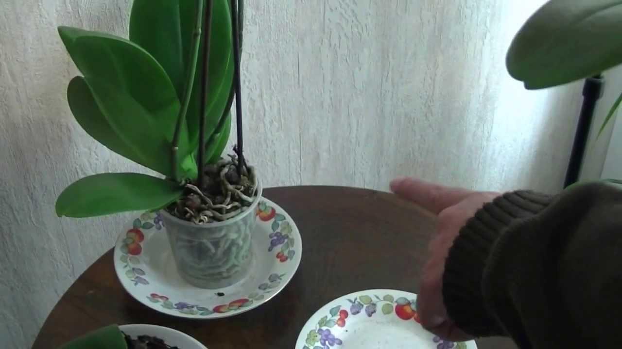 comment faire fleurir une orchidee l 39 atelier des fleurs. Black Bedroom Furniture Sets. Home Design Ideas