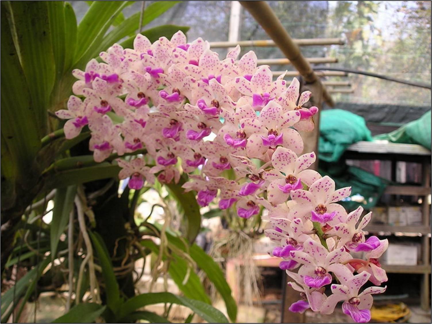 un orchid e ou une orchid e l 39 atelier des fleurs. Black Bedroom Furniture Sets. Home Design Ideas