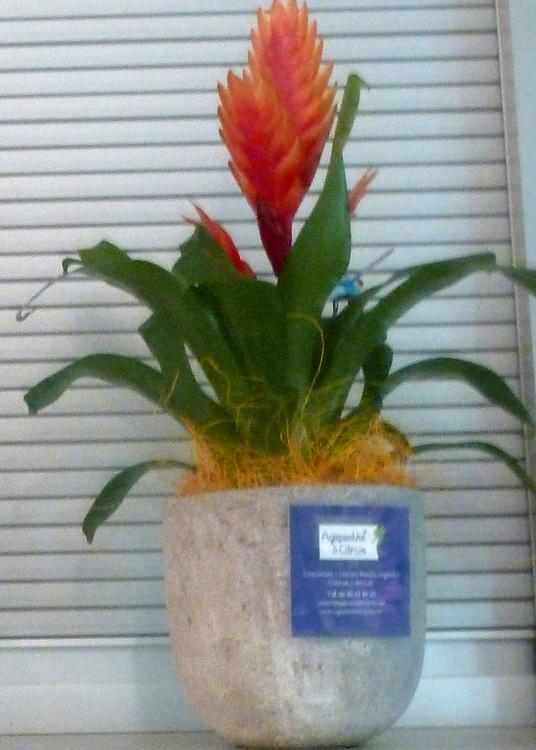 plante d appartement exotique l 39 atelier des fleurs. Black Bedroom Furniture Sets. Home Design Ideas