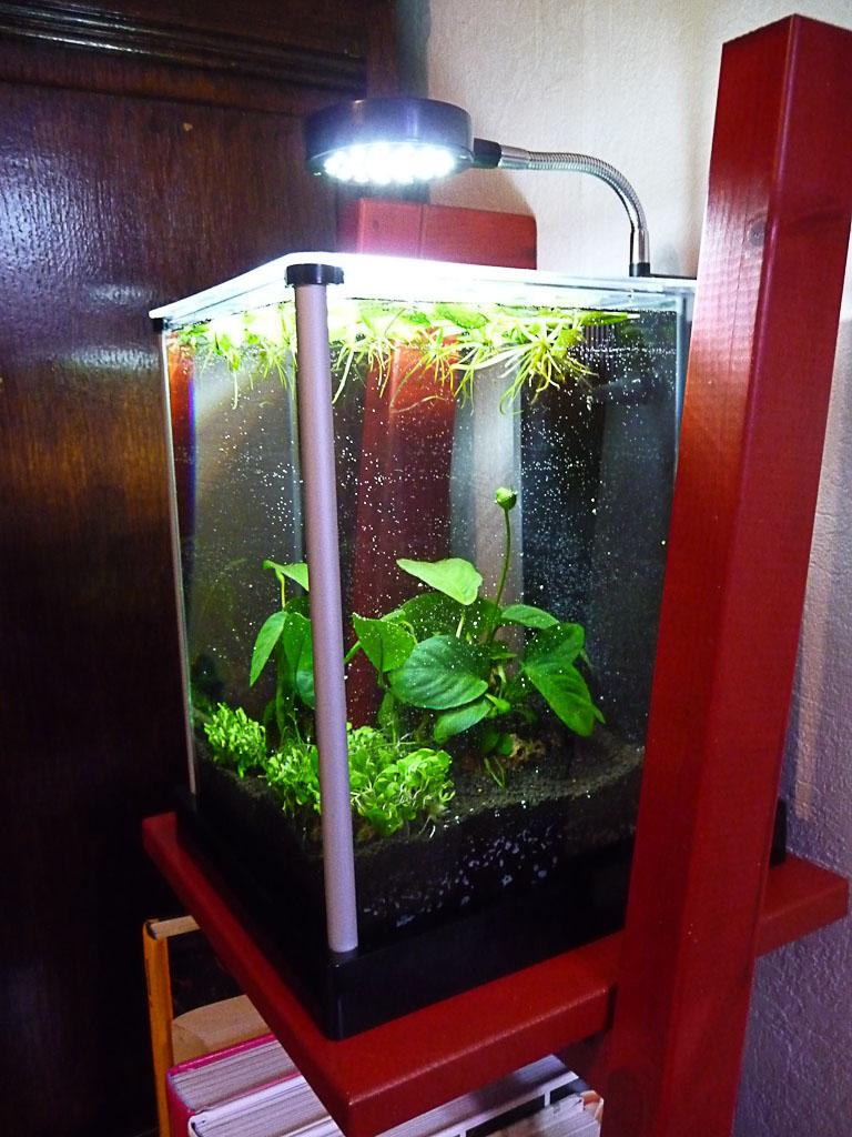pots pour plantes d int rieur design l 39 atelier des fleurs. Black Bedroom Furniture Sets. Home Design Ideas