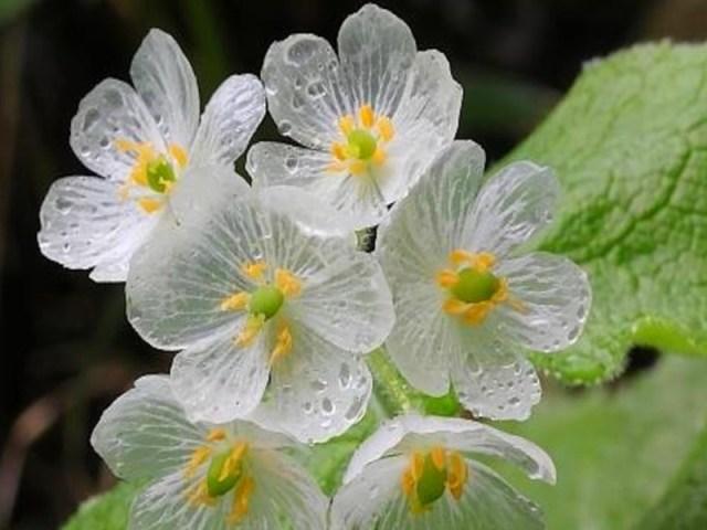 Une plantes rares vente ici l 39 atelier des fleurs for Vente de fleurs par correspondance