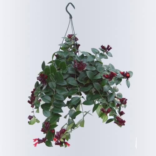 Plantes d int rieur en ligne l 39 atelier des fleurs for Plantes vertes en ligne