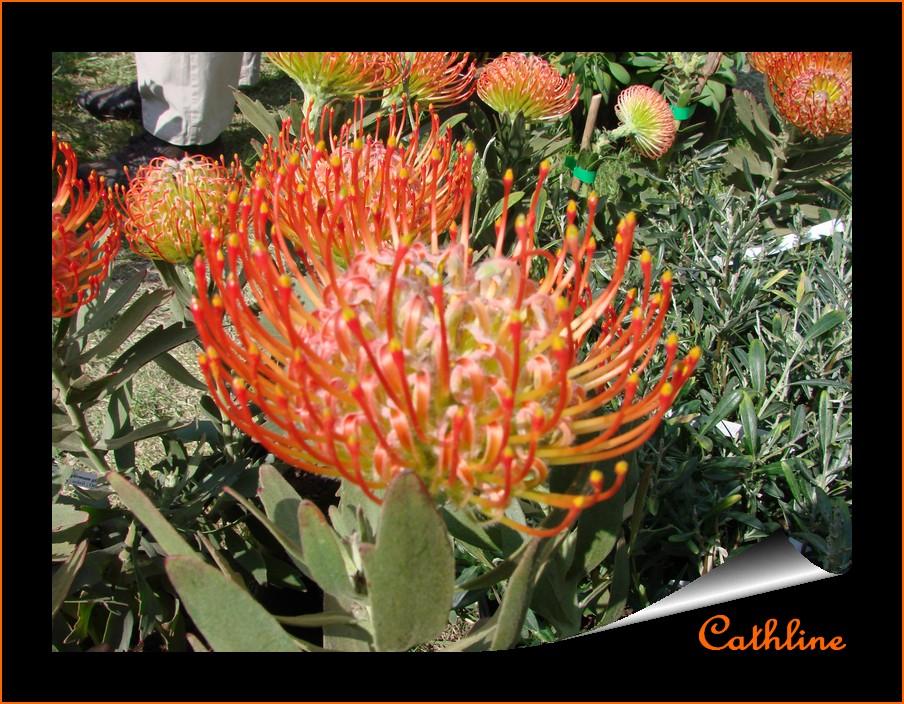 une fleur orange exotique ici l 39 atelier des fleurs. Black Bedroom Furniture Sets. Home Design Ideas