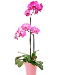 plantes grasses fleuries d int rieur l 39 atelier des fleurs. Black Bedroom Furniture Sets. Home Design Ideas