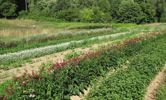 Une plants de l gumes vente en ligne ici l 39 atelier des for Vente de fleurs en ligne