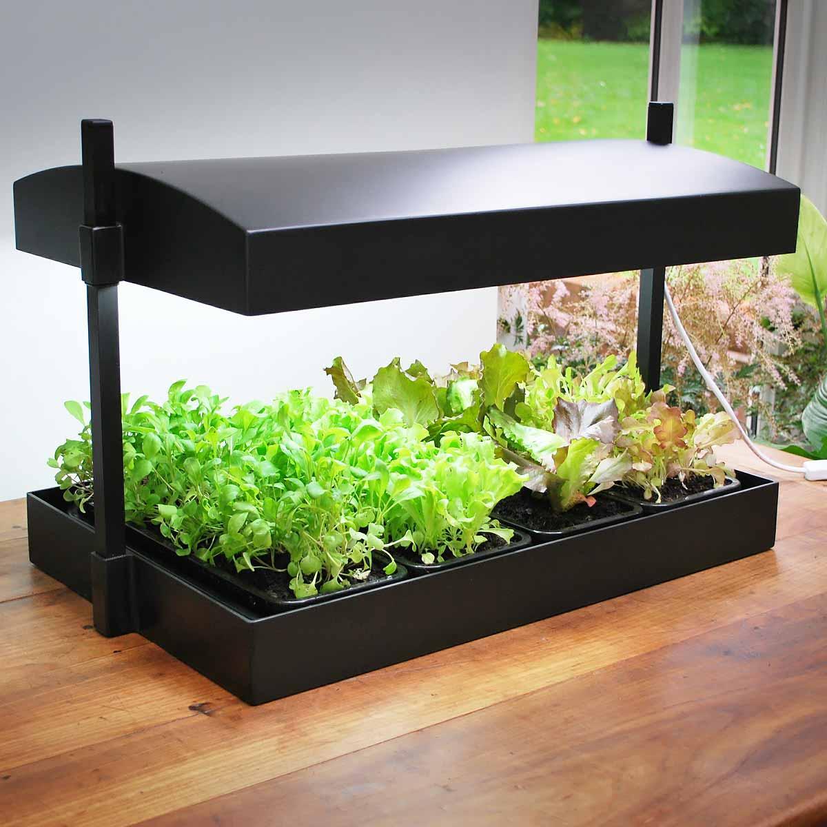 serre pour plantes d interieur l 39 atelier des fleurs. Black Bedroom Furniture Sets. Home Design Ideas