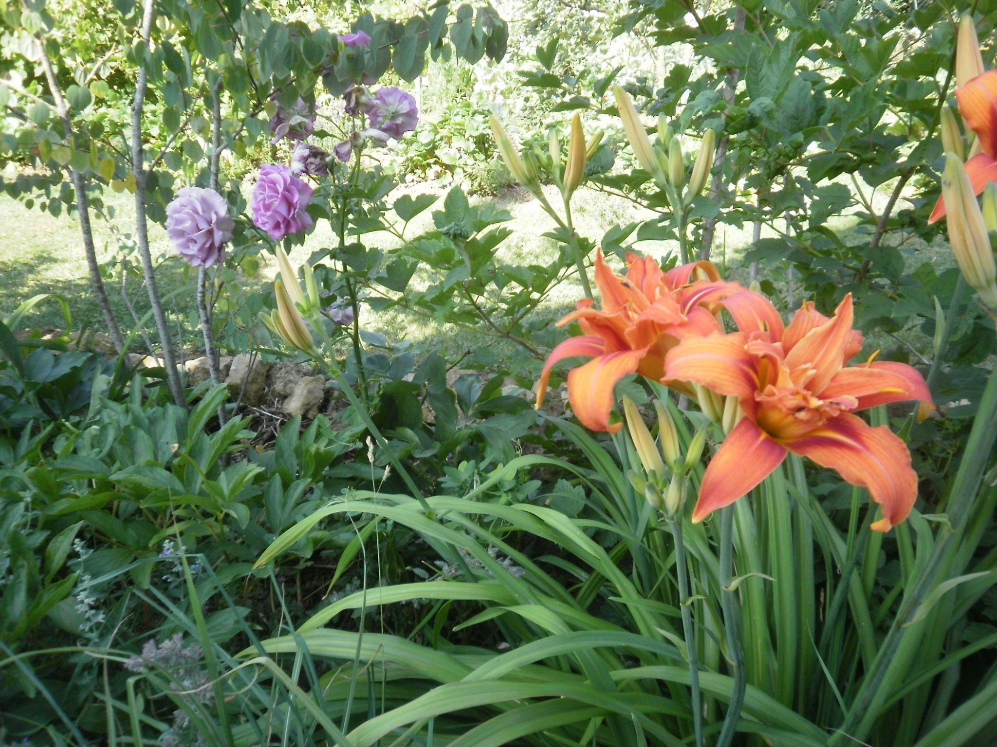 Fleur commencant par p - l'atelier des fleurs